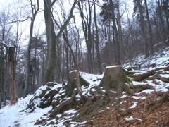 Quelle Februar 2009